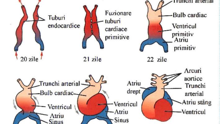 Ce trebuie să știi despre cardiologia pediatrică?